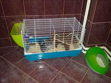Činčila sa kavezom