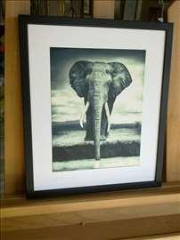 Afrika 1