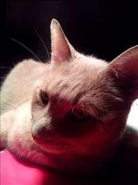 Nestao svetložuti mačak