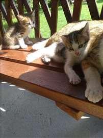 Poklanjam male mace