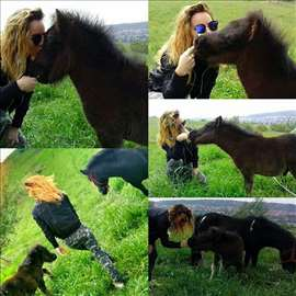 Poni kobila i zdrebe