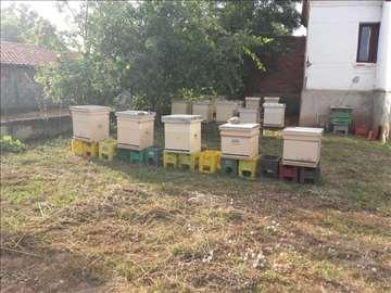 Prodajem pčele sa košnicama i bez košnica