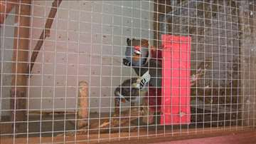 Veći kavez (volijera) za ptice