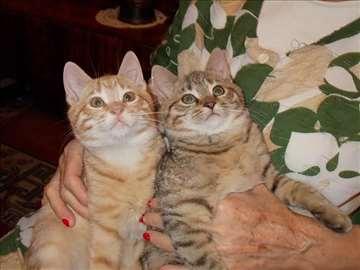 Poklanjaju se mali mačići