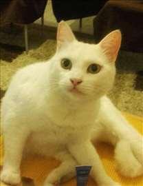 Nastala bela mačka na Bežanijskoj kosi
