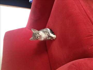 Maca traži dom