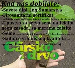 Paulownia seme sertifikat dipl.ing šumar