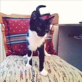Presladak mačak od dva meseca traži dom