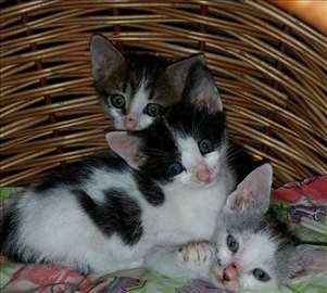 Umiljati mali mačići na poklon
