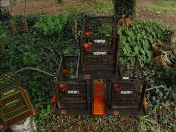 Kavezi od bambusa