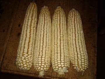 Beli i žuti kukuruz