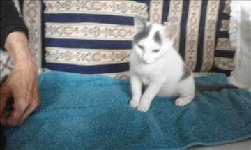 Maleni mačorčić Graci na poklon