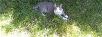 Izgubljena maca na Autokomandi