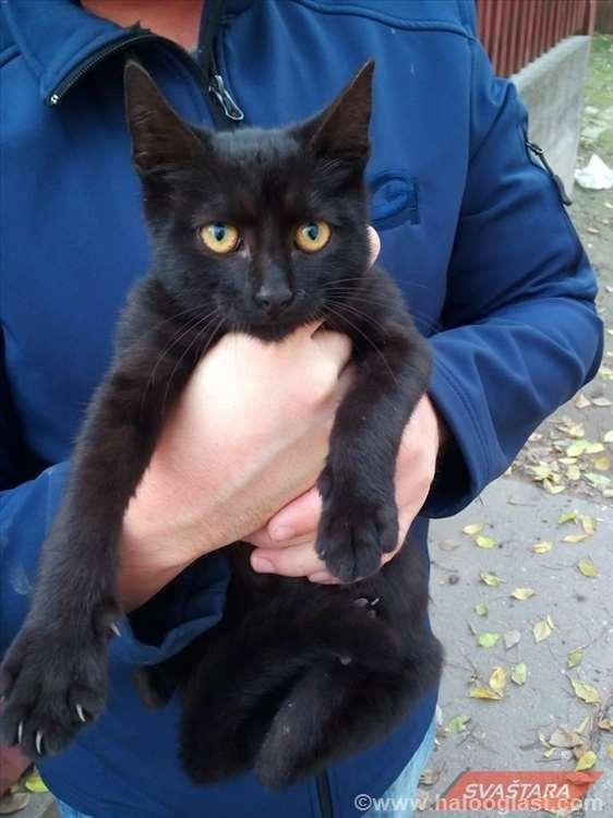 crna maca maca faks amaterski blowjob
